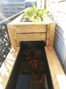 Bassins de jardin baignade naturelle pisciculture ferme aquacole - Bassin sur balcon angers ...
